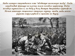 """Люди наотрез отказывались есть """"ядовитую иноземную ягоду"""". Тогда находчивый ф"""