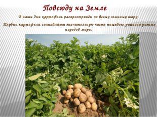 Повсюду на Земле В наши дни картофель распространён по всему земному шару. Кл