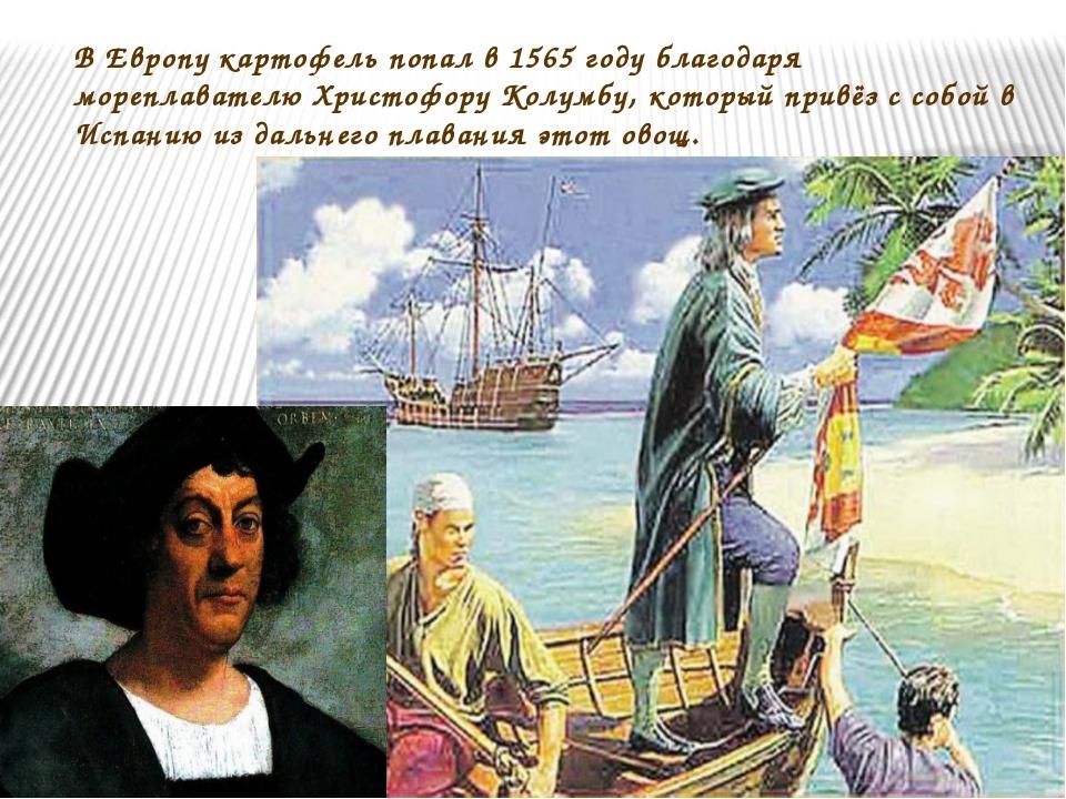 В Европу картофель попал в 1565 году благодаря мореплавателю Христофору Колум...