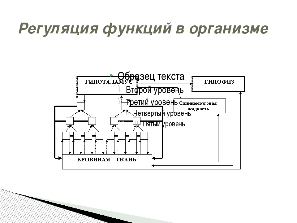 Регуляция функций в организме