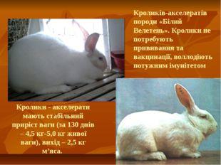 Кролики - акселерати мають стабільний приріст ваги (за 130 днів – 4,5 кг-5,0