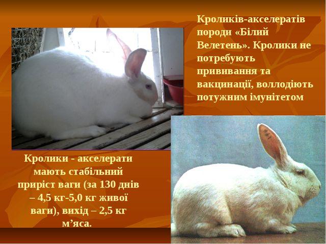 Кролики - акселерати мають стабільний приріст ваги (за 130 днів – 4,5 кг-5,0...
