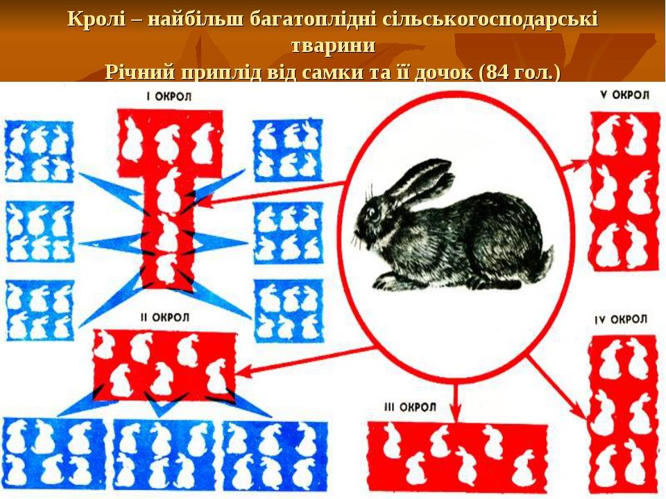 Кролі – найбільш багатоплідні сільськогосподарські тварини Річний приплід від...