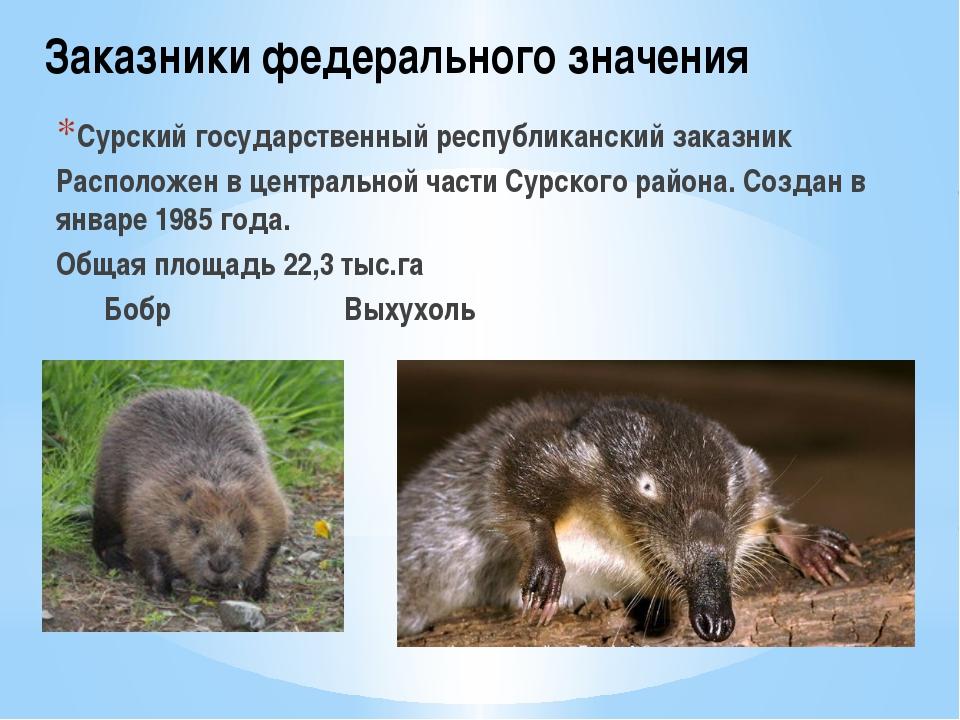 Заказники федерального значения Сурский государственный республиканский заказ...