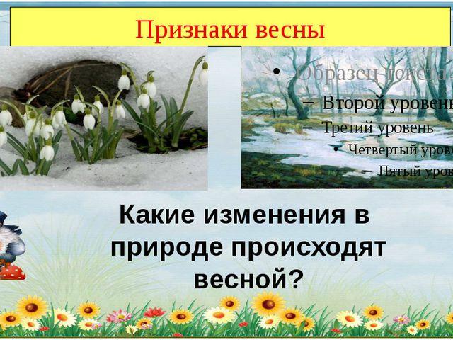 Признаки весны Какие изменения в природе происходят весной?