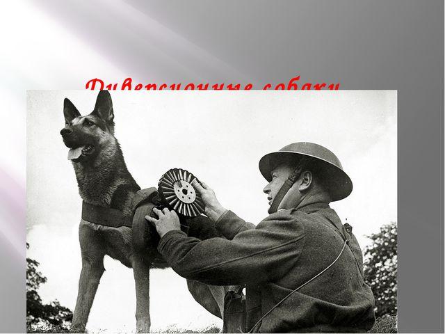 Диверсионные собаки