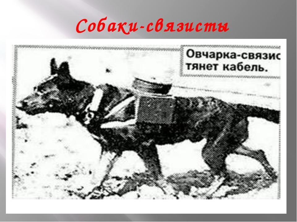 Собаки-связисты
