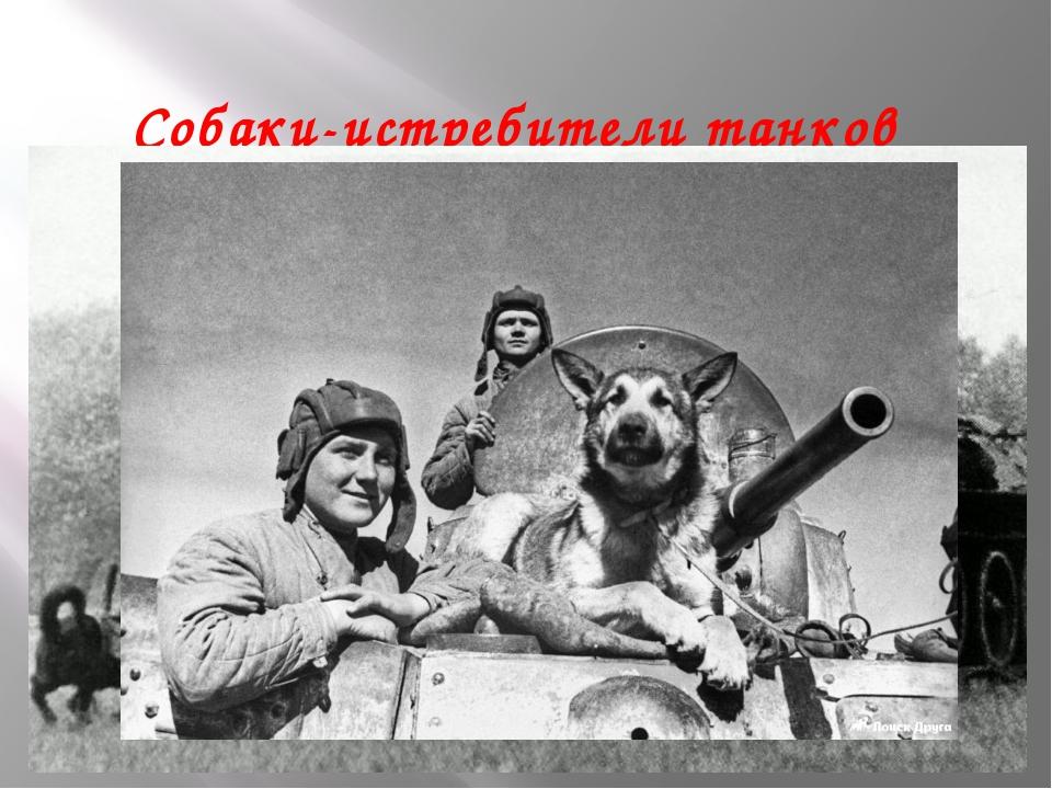 Собаки-истребители танков