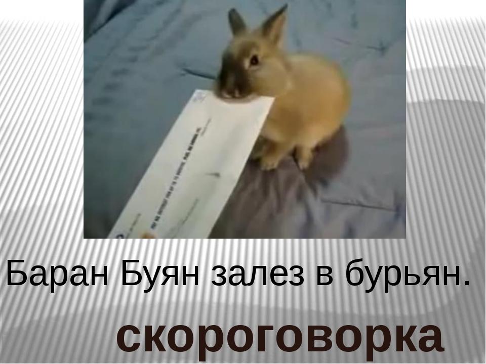 Баран Буян залез в бурьян. скороговорка