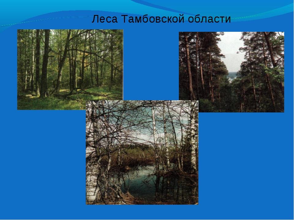 Леса Тамбовской области