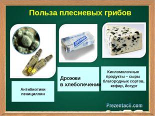 Польза плесневых грибов Антибиотики пенициллин Дрожжи в хлебопечении Кисломо