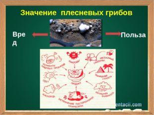 Значение плесневых грибов Вред Польза