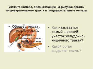 Укажите номера, обозначающие на рисунке органы пищеварительного тракта и пище
