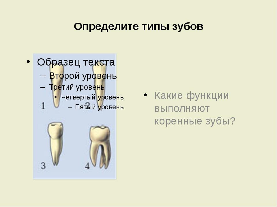 Определите типы зубов Какие функции выполняют коренные зубы?