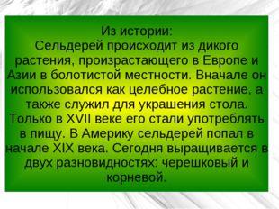 Из истории: Сельдерей происходит из дикого растения, произрастающего в Европе