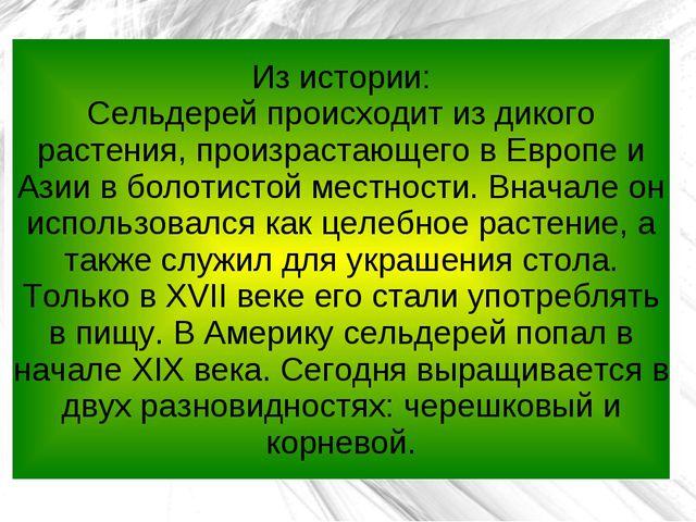 Из истории: Сельдерей происходит из дикого растения, произрастающего в Европе...