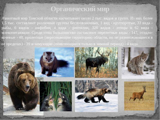 Животный мир Томской области насчитывает около 2 тыс. видов и групп. Из них б...