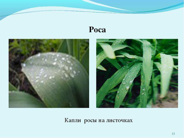 Роса Капли росы на листочках *