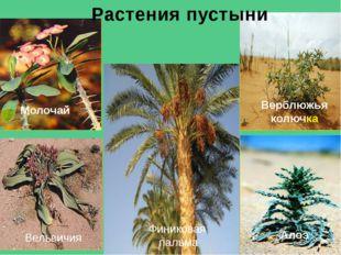 Песчаная гадюка Ящерица Тушканчик Скорпион Паук фаланга Лисица - фенек Песчан