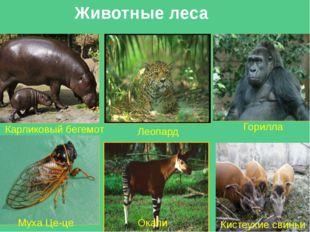 Отчет экс. группы №1 Названиеприродой зоны Влажные экваториальные леса (Гилея