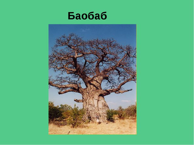 Растительноядные животные саванн Слон Зебры Носороги Антилопы Гну