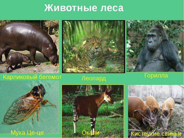 Отчет экс. группы №1 Названиеприродой зоны Влажные экваториальные леса (Гилея...