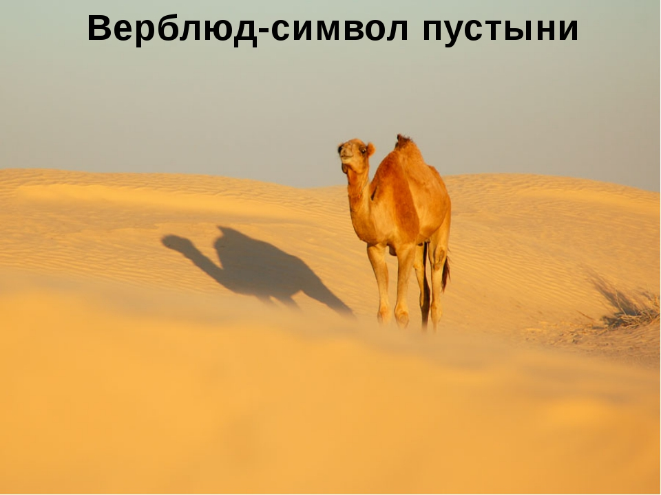 Отчет экс. группы№3 Названиеприродой зоны Тропические пустыни Сахара, Калаха...