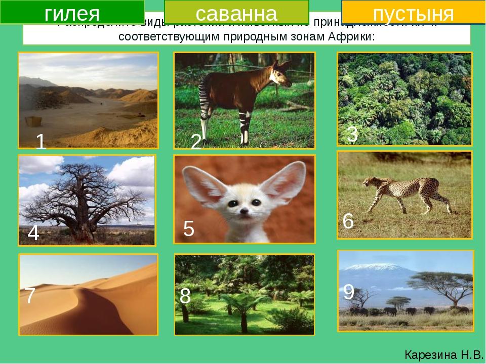 картинки животных и растений природных зон праву является