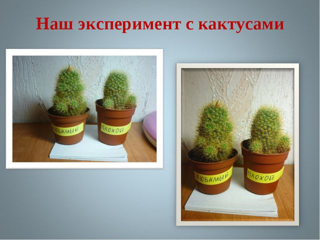 Наш эксперимент с кактусами