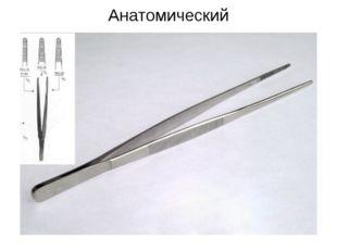 Анатомический