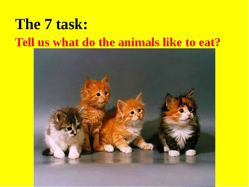 The 7 task: Tell us what do the animals like to eat?