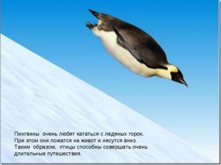 Императорский пингвин Пингвины очень любят кататься с ледяных горок. При это