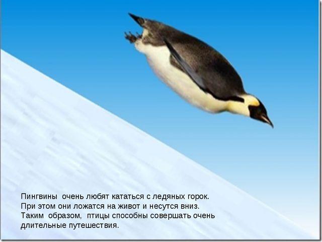 Императорский пингвин Пингвины очень любят кататься с ледяных горок. При это...