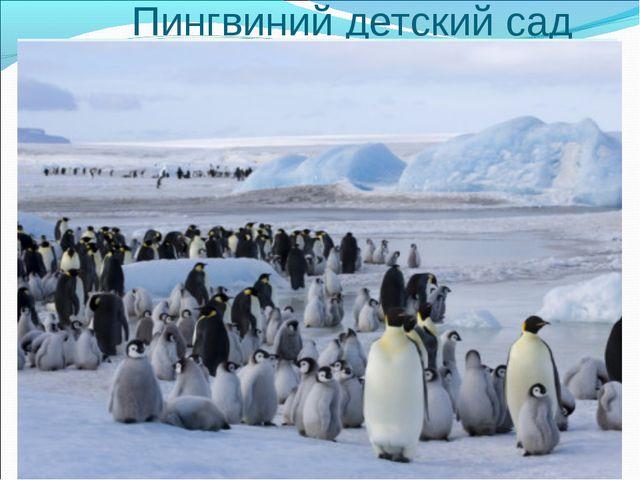 Пингвиний детский сад Па - паа !!! Ну пап!!! Может сегодня я не пойду в сад ?!