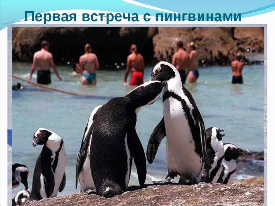 Первая встреча с пингвинами