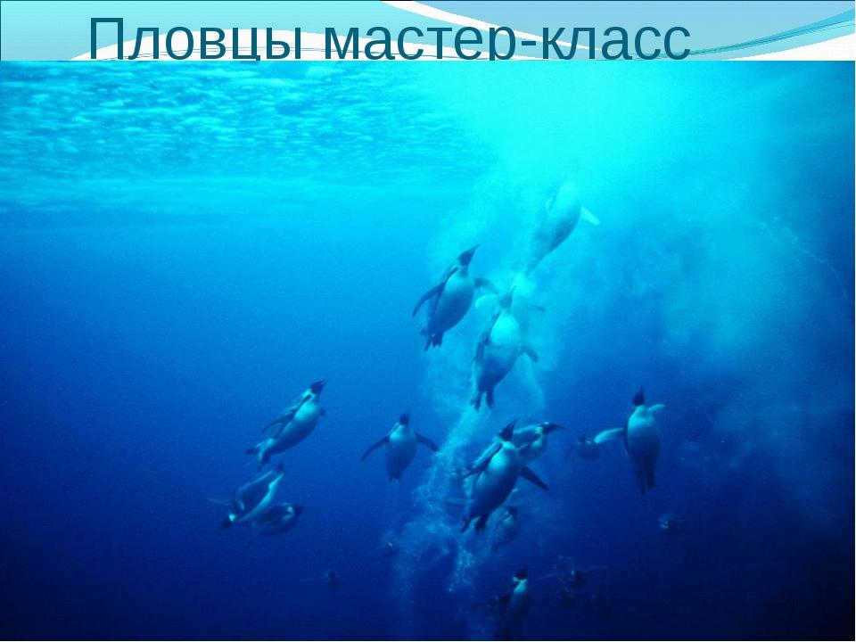 Пловцы мастер-класс Пингвин не умеет летать, но зато он отличный пловец. Тяже...