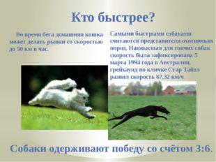 Кто быстрее? Во время бега домашняя кошка может делать рывки со скоростью до