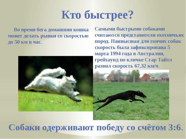 Кто быстрее? Во время бега домашняя кошка может делать рывки со скоростью до...