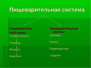Пищеварительная система Пищеваритель- ный канал: Ротовая полость Пищевод Жел