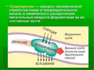 Пищеварение — процесс механической обработки пищи в пищеварительном канале и