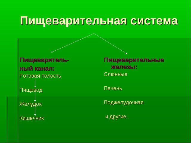Пищеварительная система Пищеваритель- ный канал: Ротовая полость Пищевод Жел...