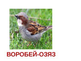 ВОРОБЕЙ-ОЗЯЗ