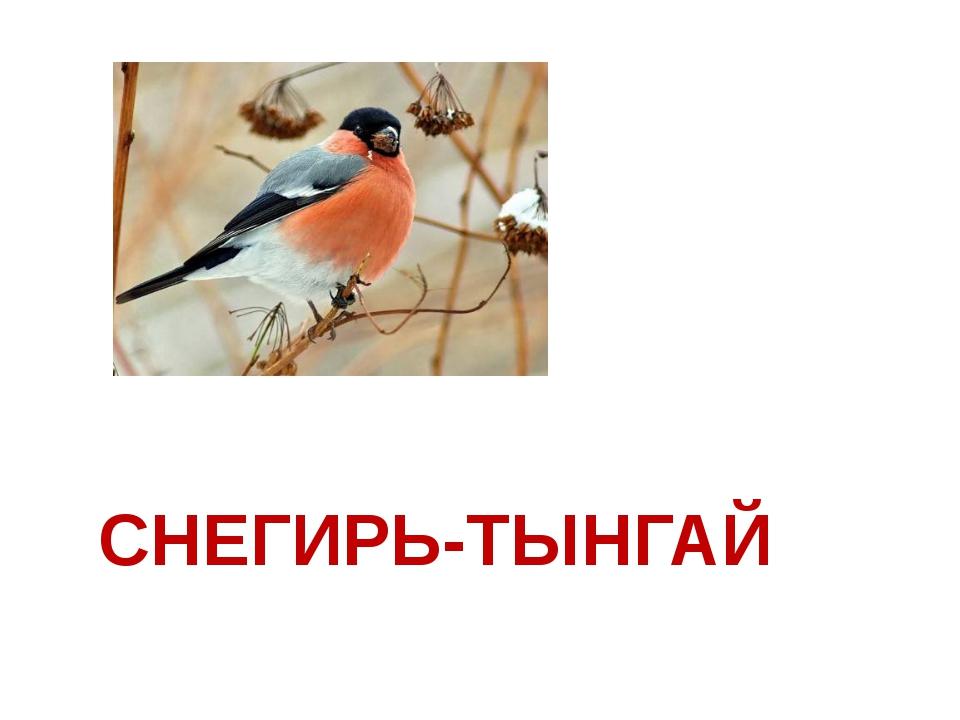 СНЕГИРЬ-ТЫНГАЙ