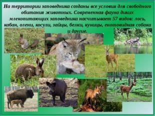 На территории заповедника созданы все условия для свободного обитания животны