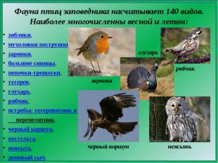 Фауна птицзаповедника насчитывает 140 видов. Наиболее многочисленны весной и
