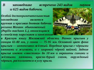 В заповеднике встречено243видов пауков и625 видов бабочек. Особой достопр