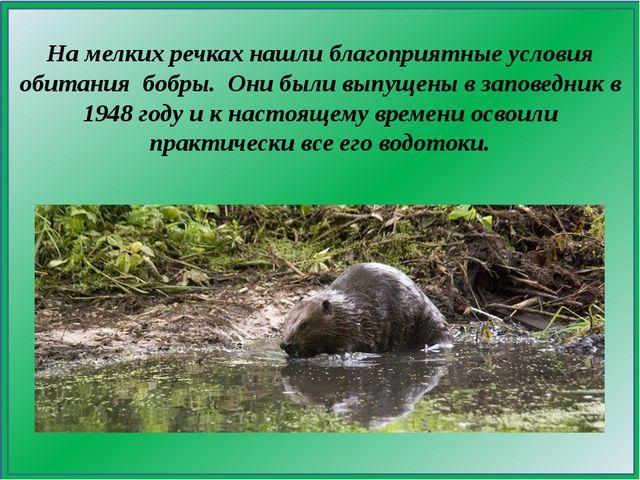 На мелких речках нашли благоприятные условия обитания бобры. Они были выпуще...
