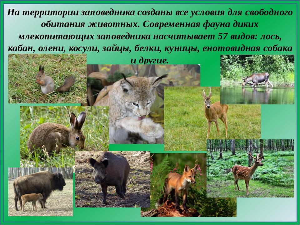 На территории заповедника созданы все условия для свободного обитания животны...