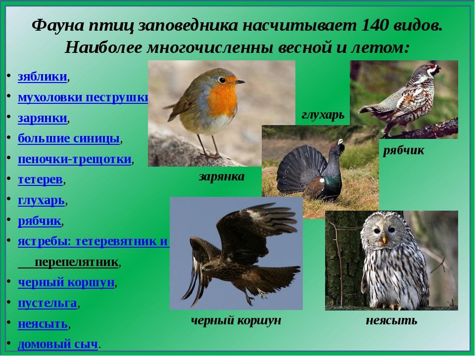 Фауна птицзаповедника насчитывает 140 видов. Наиболее многочисленны весной и...