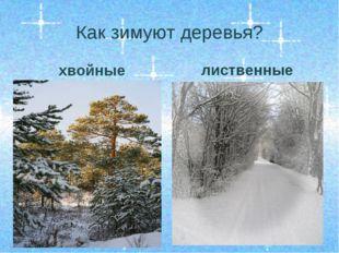 Как зимуют деревья? хвойные лиственные